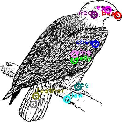 eagle_0022.png