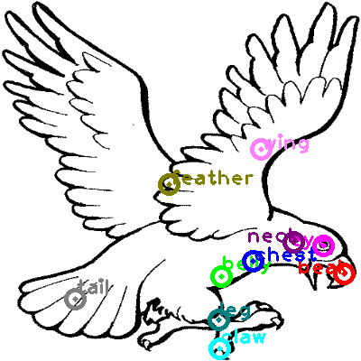 eagle_0025.png