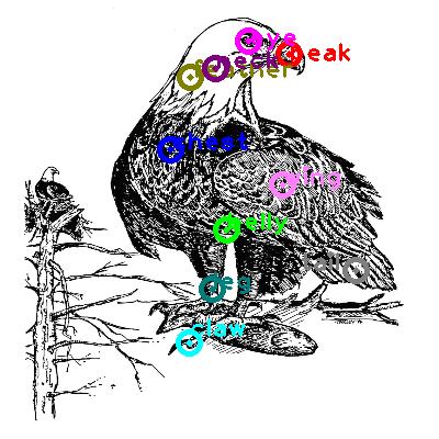 eagle_0027.png