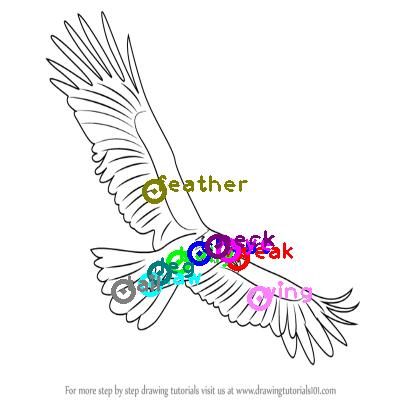 eagle_0028.png