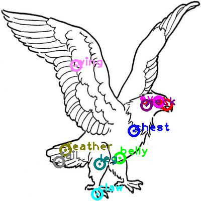 eagle_0029.png