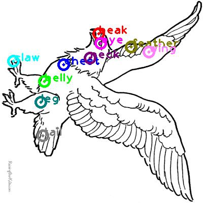 eagle_0033.png
