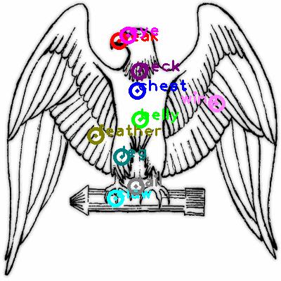eagle_0037.png