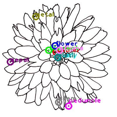 flower_0003.png