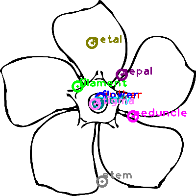 flower_0005.png