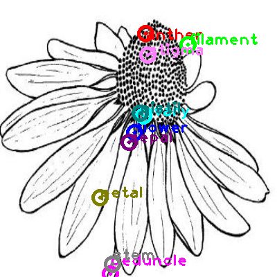 flower_0007.png