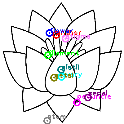 flower_0010.png