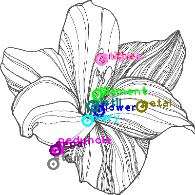 flower_0012.png