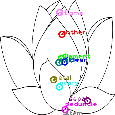 flower_0014.png