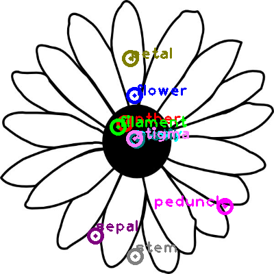 flower_0028.png