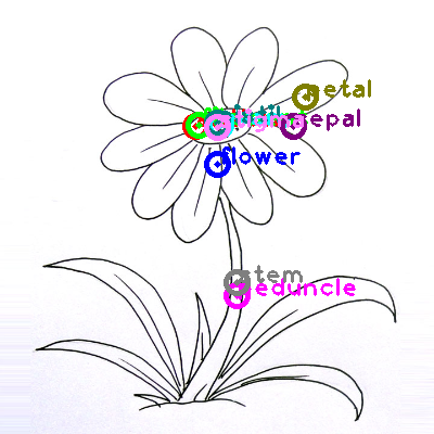 flower_0031.png