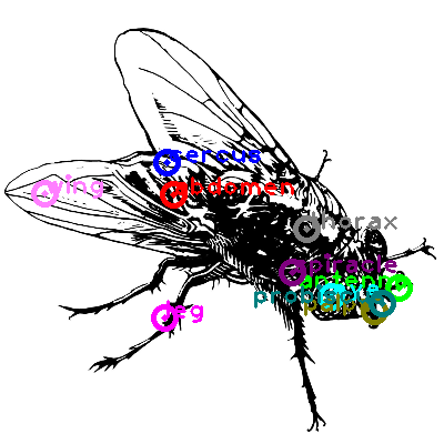 fly_0007.png