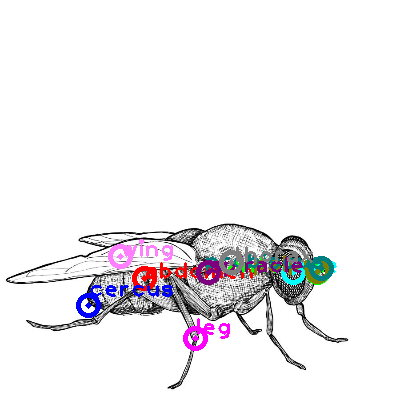 fly_0022.png