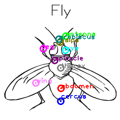 fly_0030.png