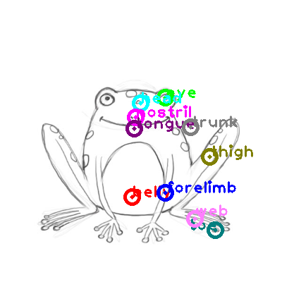frog_0032.png