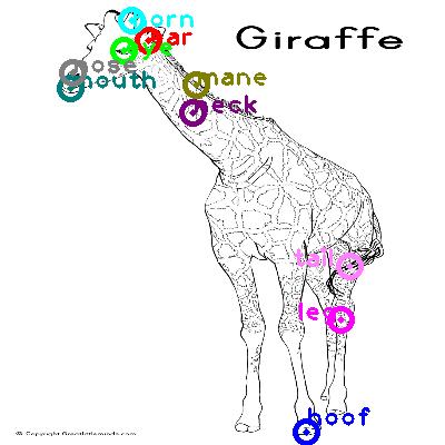 giraffe_0015.png