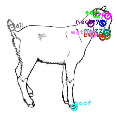 goat_0021.png