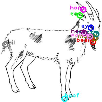 goat_0023.png