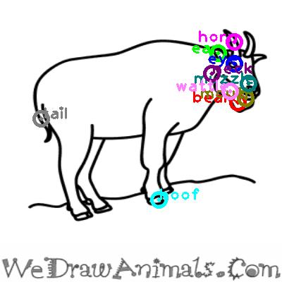 goat_0027.png