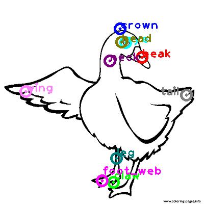 goose_0024.png