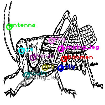 grasshopper_0002.png