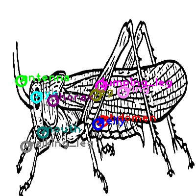 grasshopper_0003.png