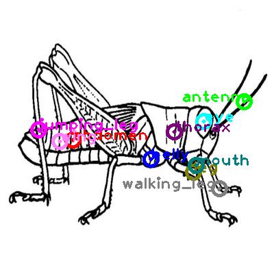 grasshopper_0004.png