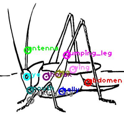 grasshopper_0012.png