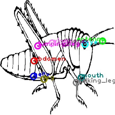 grasshopper_0014.png