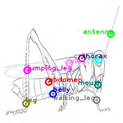 grasshopper_0017.png