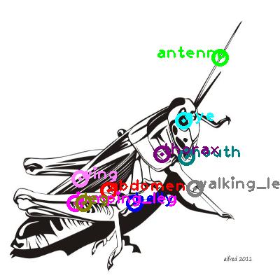 grasshopper_0022.png
