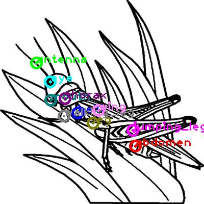 grasshopper_0026.png