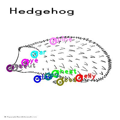 hedgehog_0001.png
