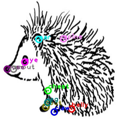 hedgehog_0006.png