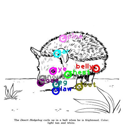 hedgehog_0009.png
