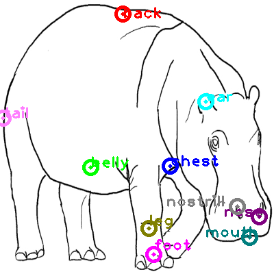 hippo_0000.png