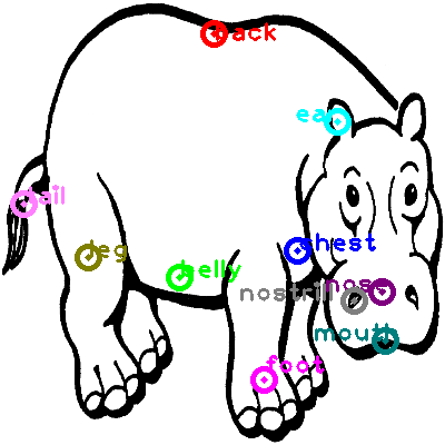 hippo_0018.png