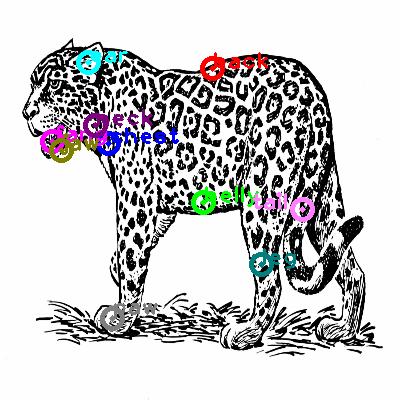 jaguar_0000.png