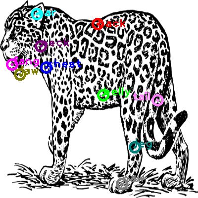 jaguar_0003.png