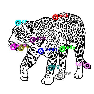 jaguar_0004.png