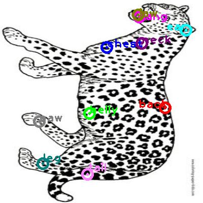 jaguar_0008.png