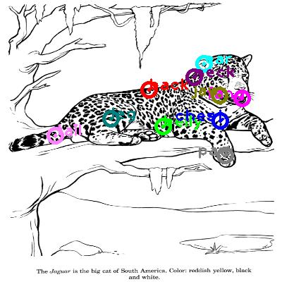 jaguar_0011.png