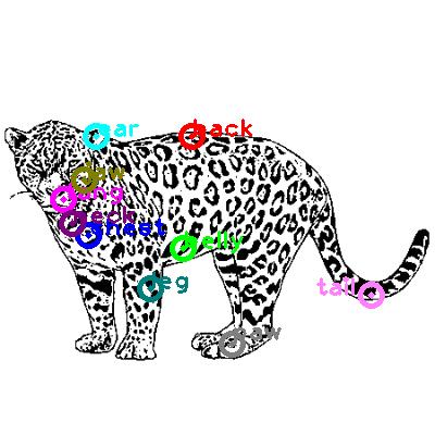 jaguar_0013.png