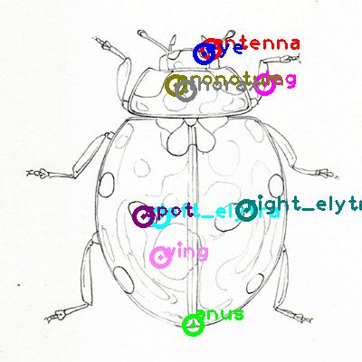 ladybird_0024.png