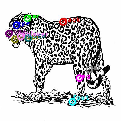 leopard_0001.png