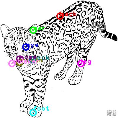 leopard_0008.png