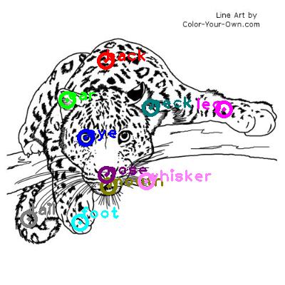 leopard_0009.png