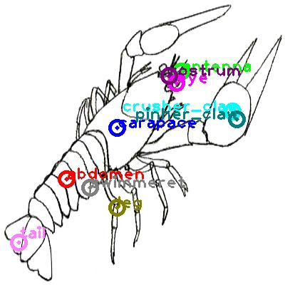 lobster_0001.png