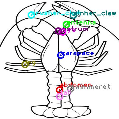 lobster_0002.png