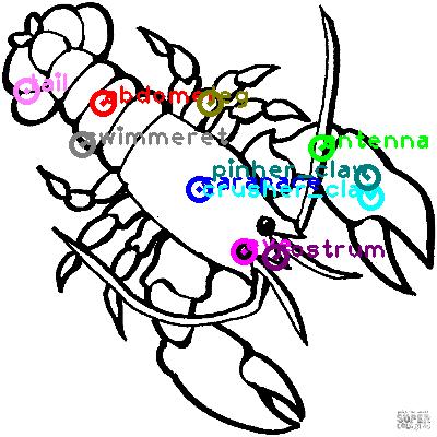 lobster_0008.png